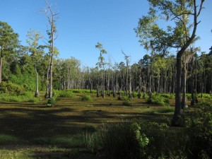 Sam Houston Jones Swamp