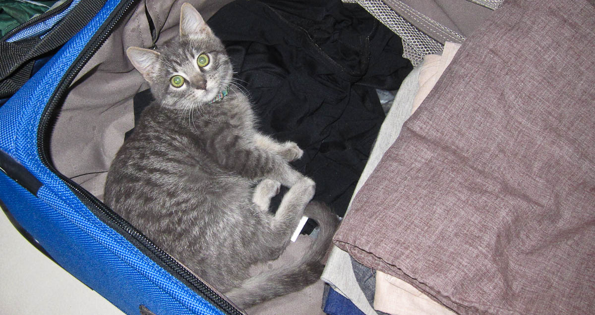 Lexi in the Suitcase